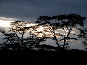 Serengeti Silhouette