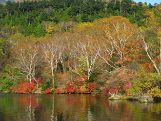 Fall Foliage above Nikko