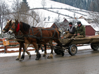 Horse and Cart in Vatra Moldovitei