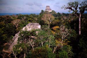 Tikal Rising Above the Trees