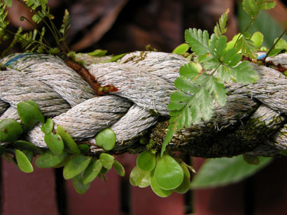 Plants Growing on the Rope
