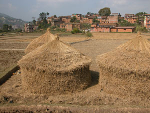 Dhulikel, Nepal - Autumn Fields