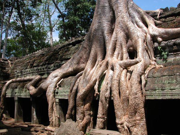 Angkor, Cambodia - Ruins of Ta Prohm and the Power of Nature