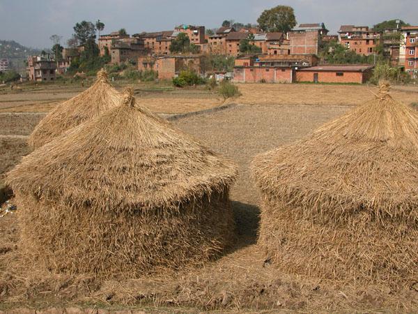 Clearing the Fields near Banepa, Nepal