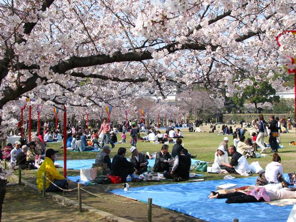 Hanami (Cherry Blossom) Party at Himeji Castle, Japan