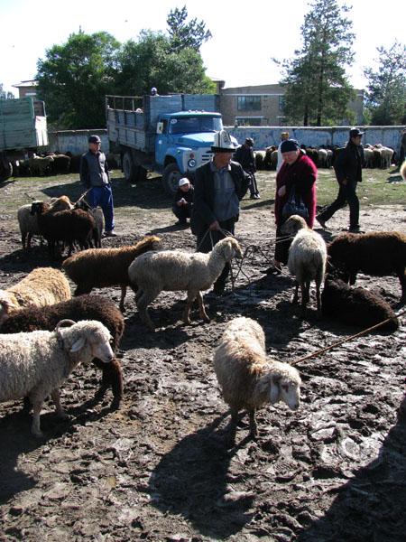 Sunday Animal Market in Karakol, Kyrgyzstan