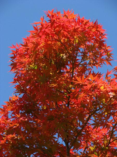 Nikko, Japan - Fall Colors