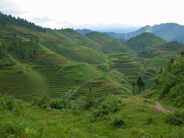 Beautiful Rice Terraces of Ping An, China