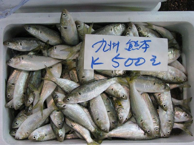 Tokyo, Japan - Tsukiji Fish Market